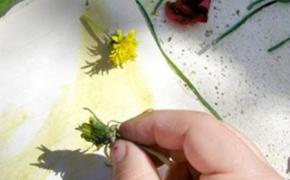 Dipingere con gli ortaggi